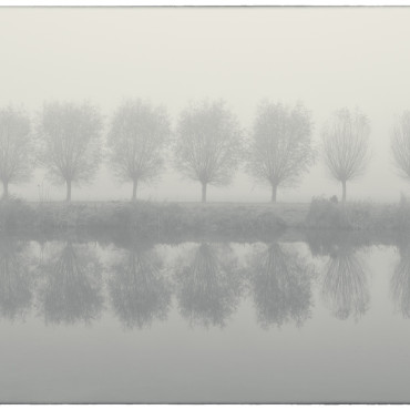 Willows, Noorderneg, Heiloo